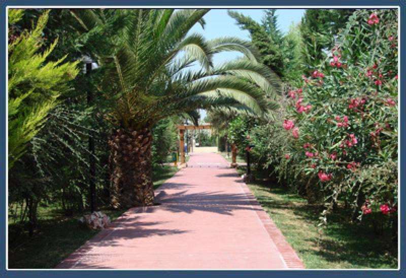 Hotel Alkyon - Vrachati - Korinthia